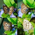 The Butterfly Series-Best viewed large (418609739).jpg