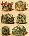 The Cactaceae - descriptions and illustrations of plants of the cactus family (1919-1923.) (20486061206).jpg