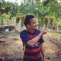 The Grapes of Guimaras.jpg