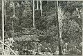 The Land of the Lyre bird; a story of early settlement in the great forest of south Gippsland. Being a description of the Big Scrub in its virgin state with its birds and animals, and of the (14563347847).jpg