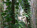 The Rainforest - Flickr - treegrow (2).jpg