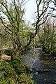 The River Lynher below Cadson Bury Fort - geograph.org.uk - 407984.jpg