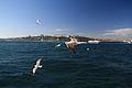 The Seraglio Point (8424182431).jpg