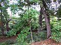 The garden of Fujiyama family 2.jpg