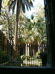 The garden of Santa Església Catedral Basílica de Barcelona - 3 - panoramio.jpg