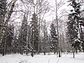 The outer wood. On the glade. January 2014. - Опушка леса. На полянке. Январь 2014. - panoramio.jpg