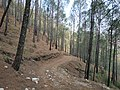 The way in the mountains of Pine trees.jpg