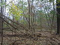 Theodore Roosevelt Island trails (3).JPG