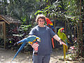 Three macaws -Macaw Mountain Bird Park, Honduras-8b.jpg