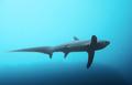 Thresher Shark at Monad Shoal.png