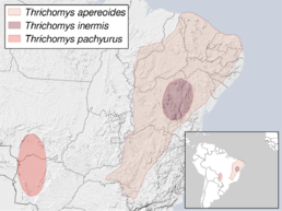 Thrichomys distribution (gray).png