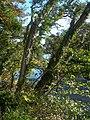 Through The Trees - geograph.org.uk - 578967.jpg