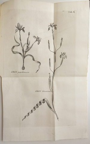 Carl Peter Thunberg - Image: Thunberg 1782