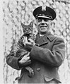 Tige the White House cat and pet of Mrs. Coolidge has been returned (2002713128).jpg