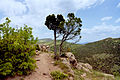 Timber Creek Overlook01.jpg