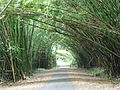 TnT Chaguaramas Bamboo Cathedral.jpg