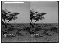To Sinai via the Red Sea, Tor, and Wady Hebran. Scene in the midst of el-Kaa. LOC matpc.01987.jpg
