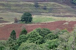 Dule Tree Wikipedia