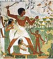 Tomb of Nakht (9).jpg