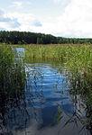 Torfyanka lake - Moscow Region, Russia - panoramio.jpg