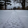 Trail through the snow - panoramio.jpg