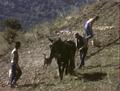 Travaux des champs à l'ancienne.png