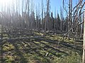 Tree planting in Ashley National Forest - 2017 01.jpg