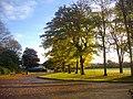 Trees in Duthie Park - geograph.org.uk - 1063229.jpg