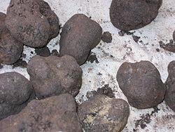 https://upload.wikimedia.org/wikipedia/commons/thumb/7/7c/Truffle_3.jpg/250px-Truffle_3.jpg