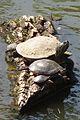 Turtle Family.jpg