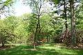Tyler Arboretum - DSC01805.JPG
