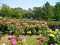 Tyler Rose Garden.jpg