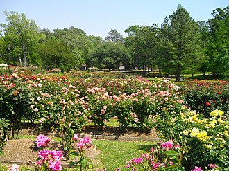 Northeast Texas - Rose garden in Tyler, Texas