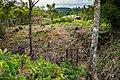 USAID Measuring Impact Conservation Enterprise Retrospective (Philippines; Nagkakaisang Tribu ng Palawan) (26420754448).jpg