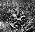 USMC infantryman Terry Moore May 1945.jpg