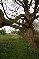 Under the spreading Chestnut tree - geograph.org.uk - 1247105.jpg