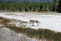 Upper Geyser Basin Yellowstone 09.JPG
