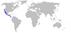 Range of the round stingray