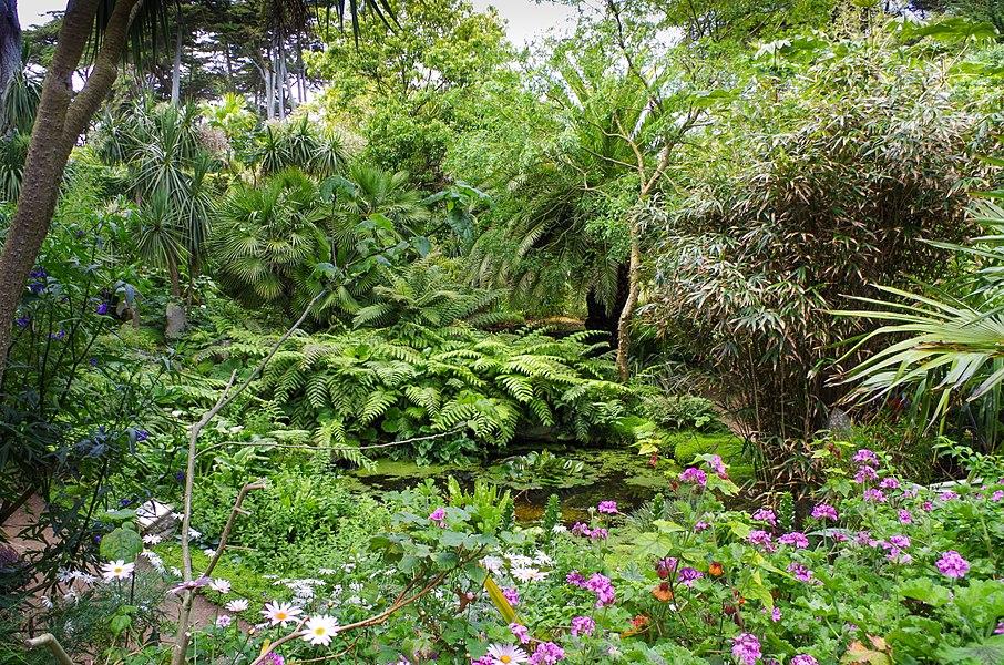 Végétation tropicale sur l'île de Batz - Jardin Georges Delaselle