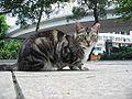 VP cat chiu.jpg