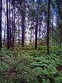 Valdaysky District, Novgorod Oblast, Russia - panoramio (2800).jpg