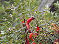 Valley of Flowers National Park 22.JPG
