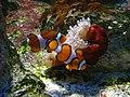 Vannes - aquarium (11).jpg