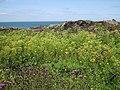 Vegetation in the Llam Carw Heath - geograph.org.uk - 1417949.jpg