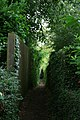Very Narrow Footpath - geograph.org.uk - 877774.jpg