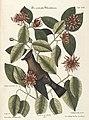 Verzameling van uitlandsche en zeldzaame vogelen (Tab. XCII) (7894260966).jpg