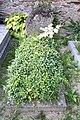 Veselí-evangelický-hřbitov-komplet2019-028.jpg