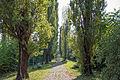 Viale del Mauriziano (4).jpg