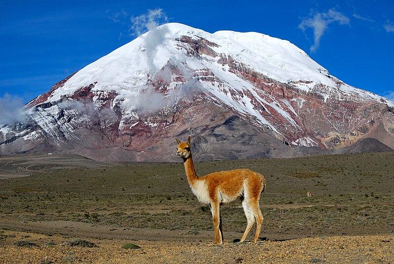 Вікунья на фоні гори Чімборасо