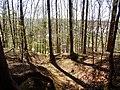 Viehleite Pirna 2017 Un camino natural.jpg